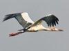 stork фото